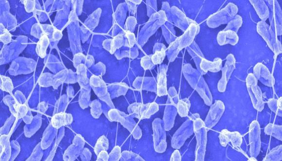 bakterija u urinu