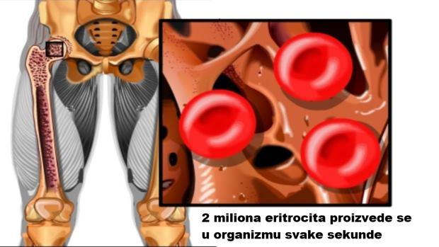 rbc u krvi
