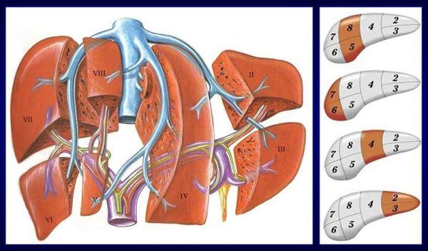 rak jetre metastaze