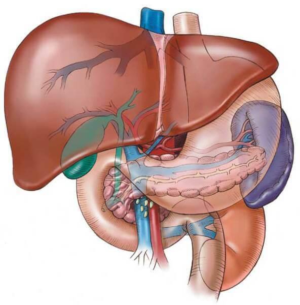 uvecana jetra i slezina