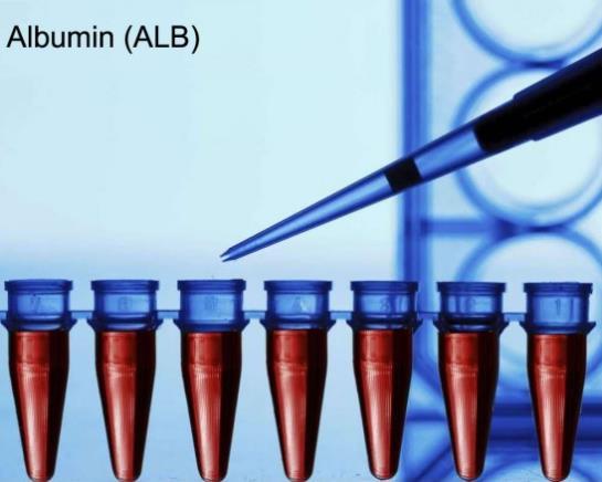 albumini u krvi