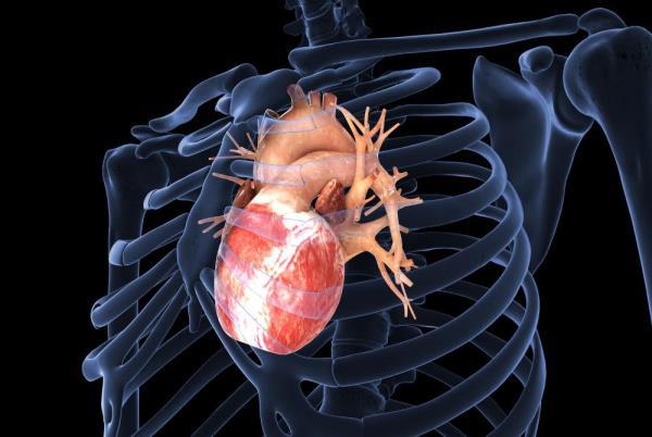 sportsko srce uzrok