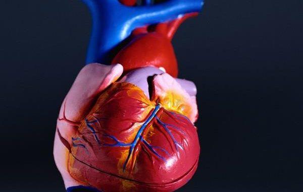 zapaljenje srcanog misica