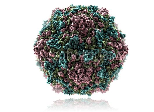 sta je koksaki virus b